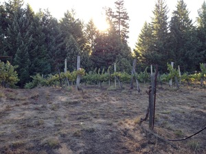 Blakeman Vineyard Photo