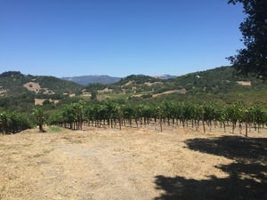 Sullivan Vineyard straddling Bennett Valley and Sonoma Mtn